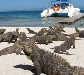 Cayo Blanco Varadero Iguanas